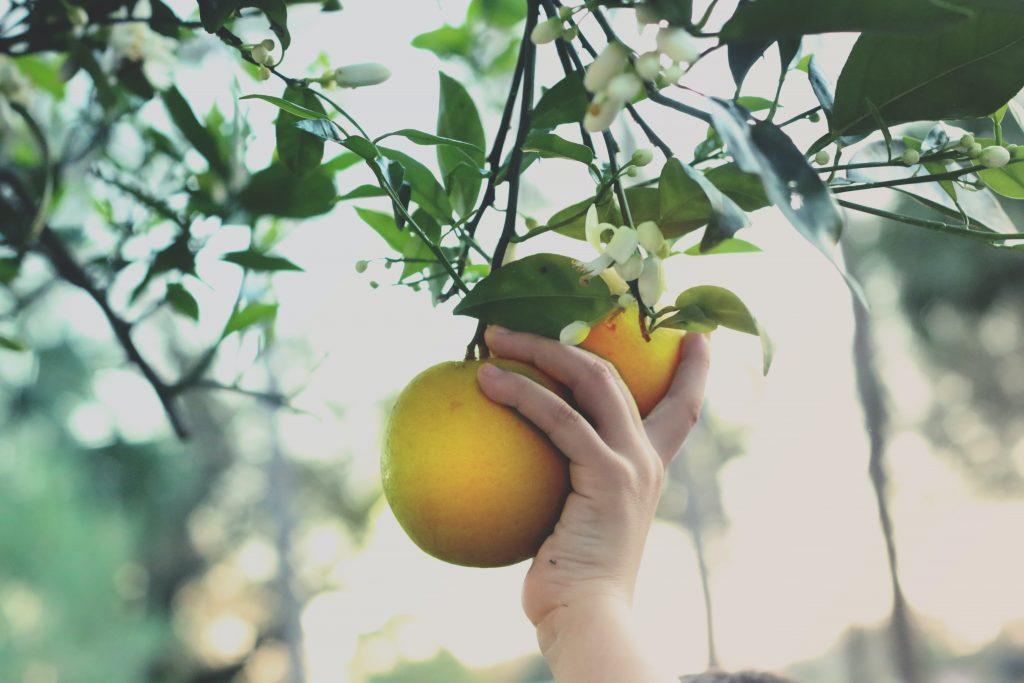 Diensten Mobina vruchten plukken